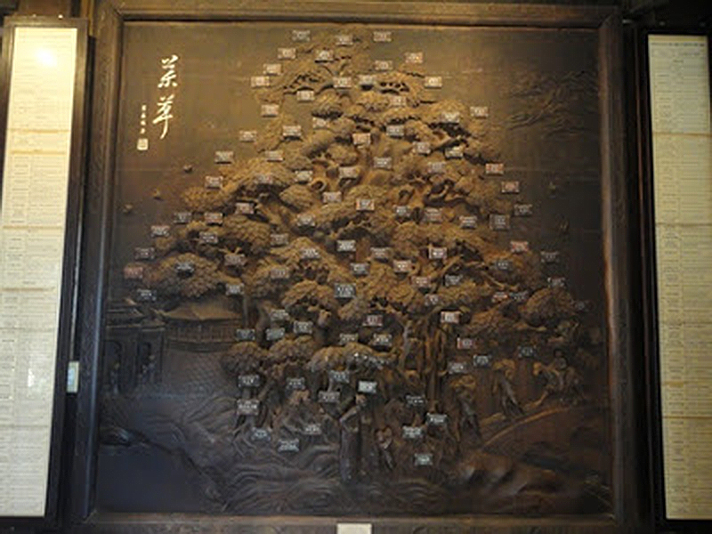 The Tree of Traditional Vietnamese Medicine